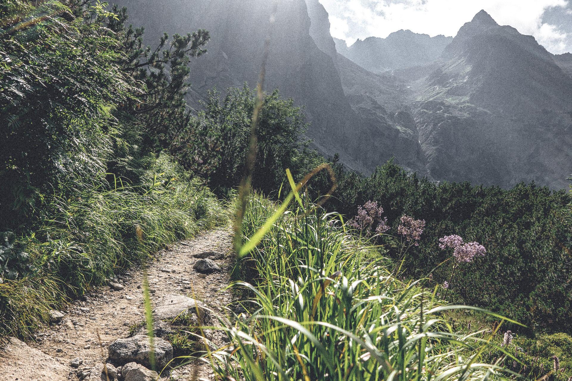 Flora und Fauna in der Hohen Tatra