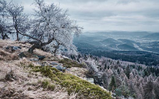 Wanderung Hoher Schneeberg (Děčínský Sněžník), auch ohne Schnee schön.