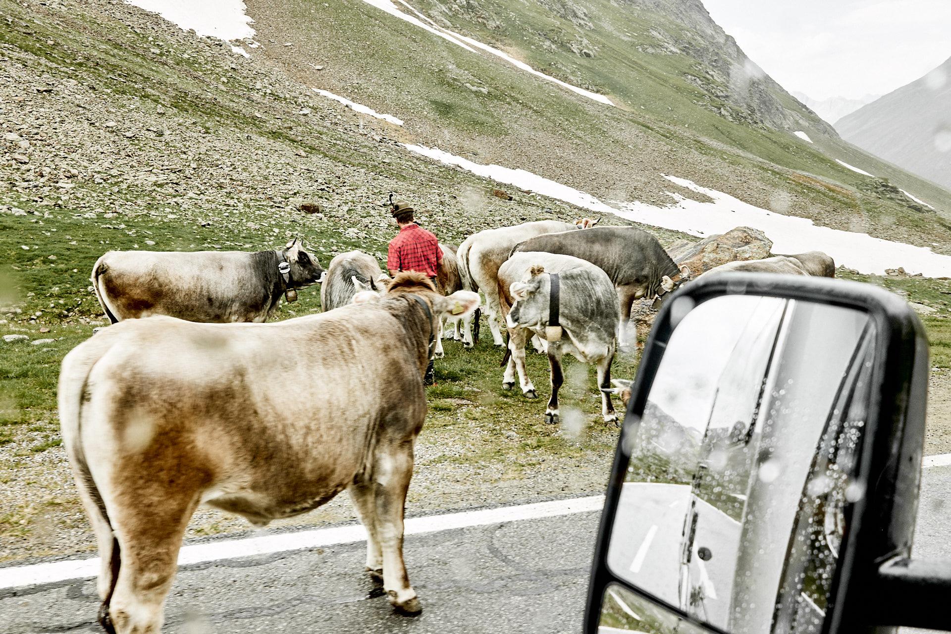 Bauer und Kühe am Wegesrand