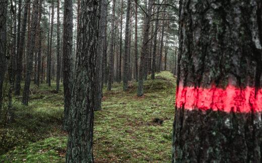 Hashtag Vanlife im Wald
