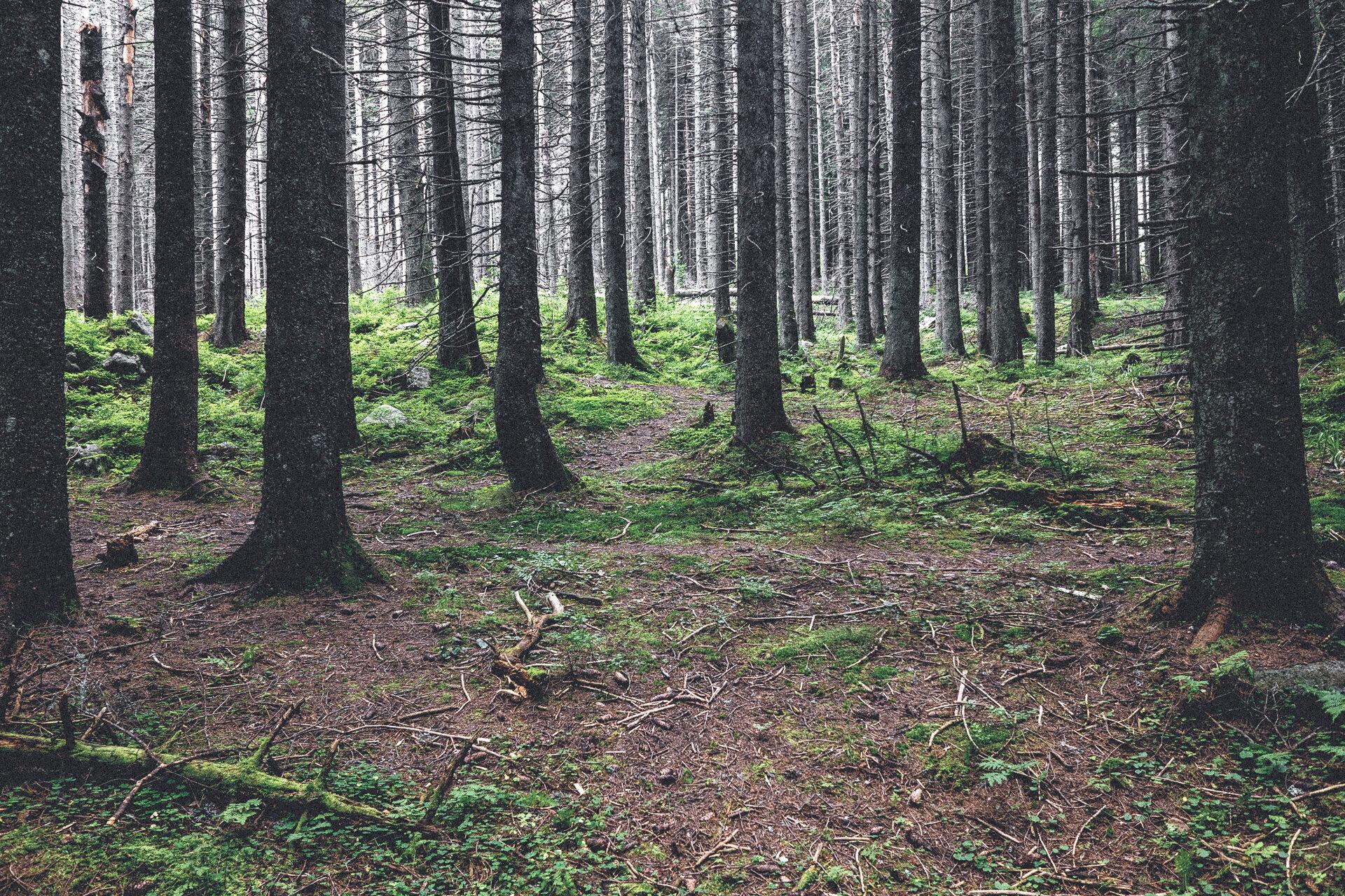 Waldschäden im Böhmischen Wald