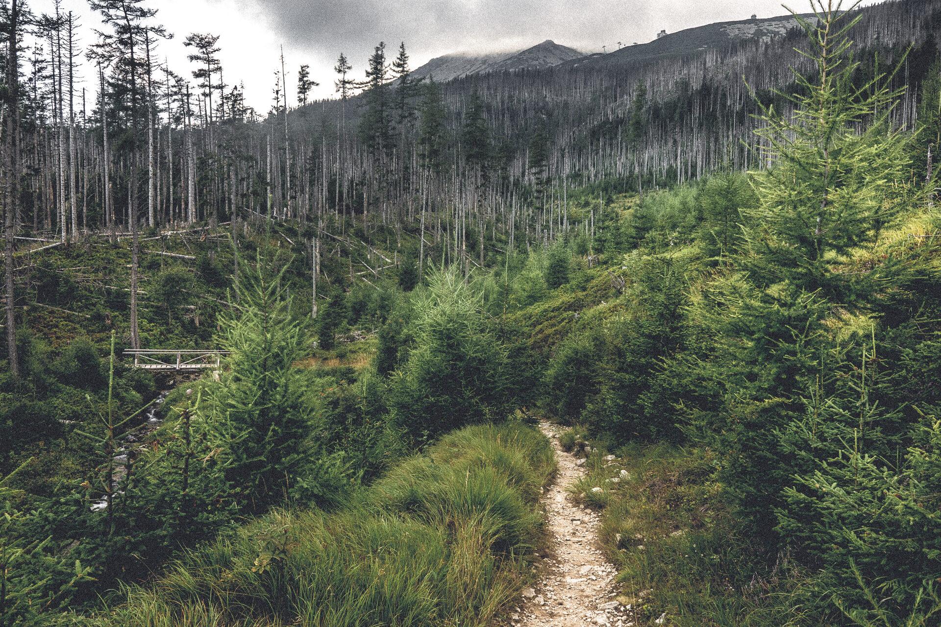 Waldwanderweg – letzte Tour für uns