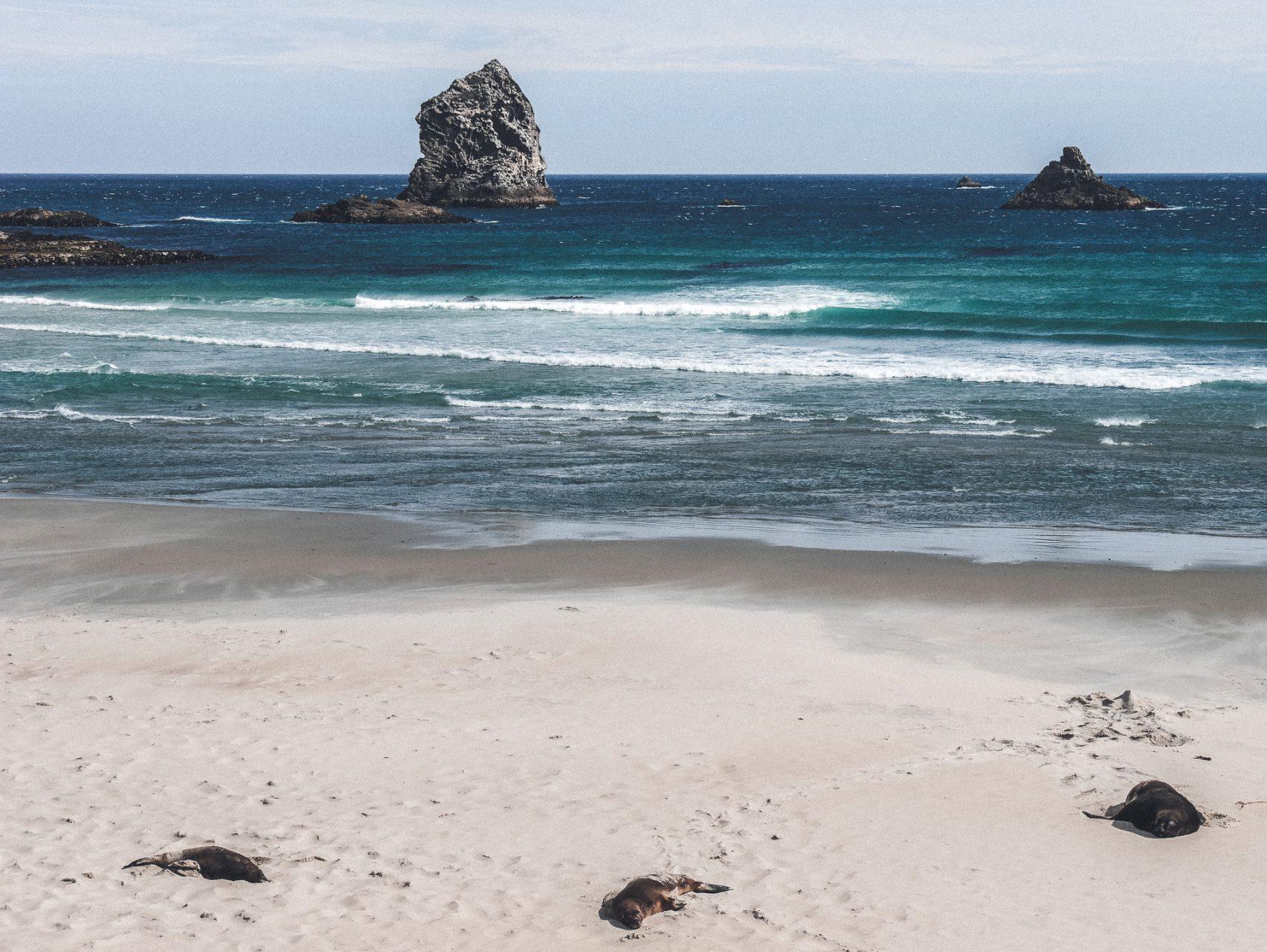 Auch Seelöwen relaxen am Strand in Neuseeland