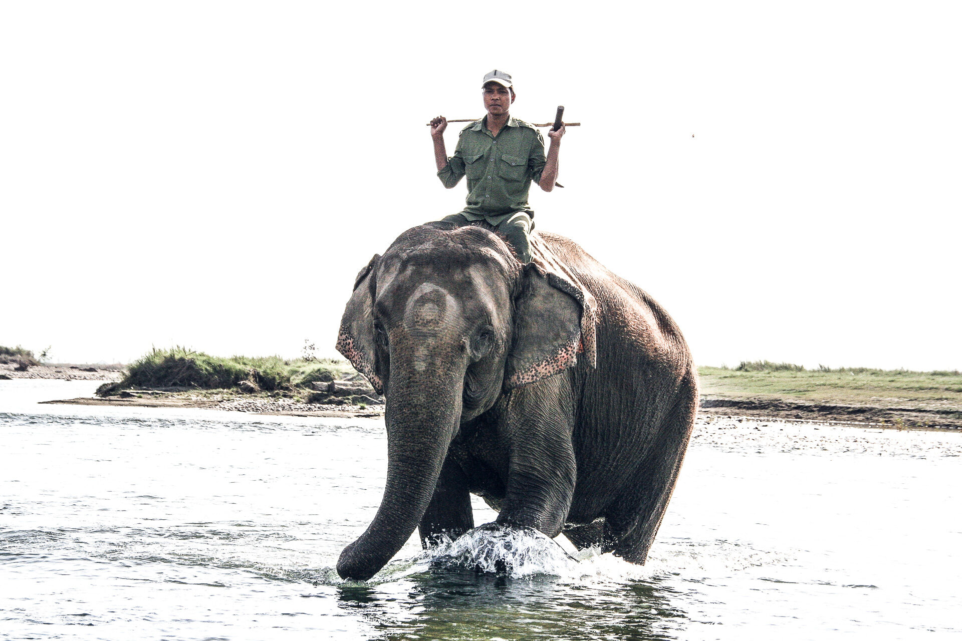 Elefant mit Reiter