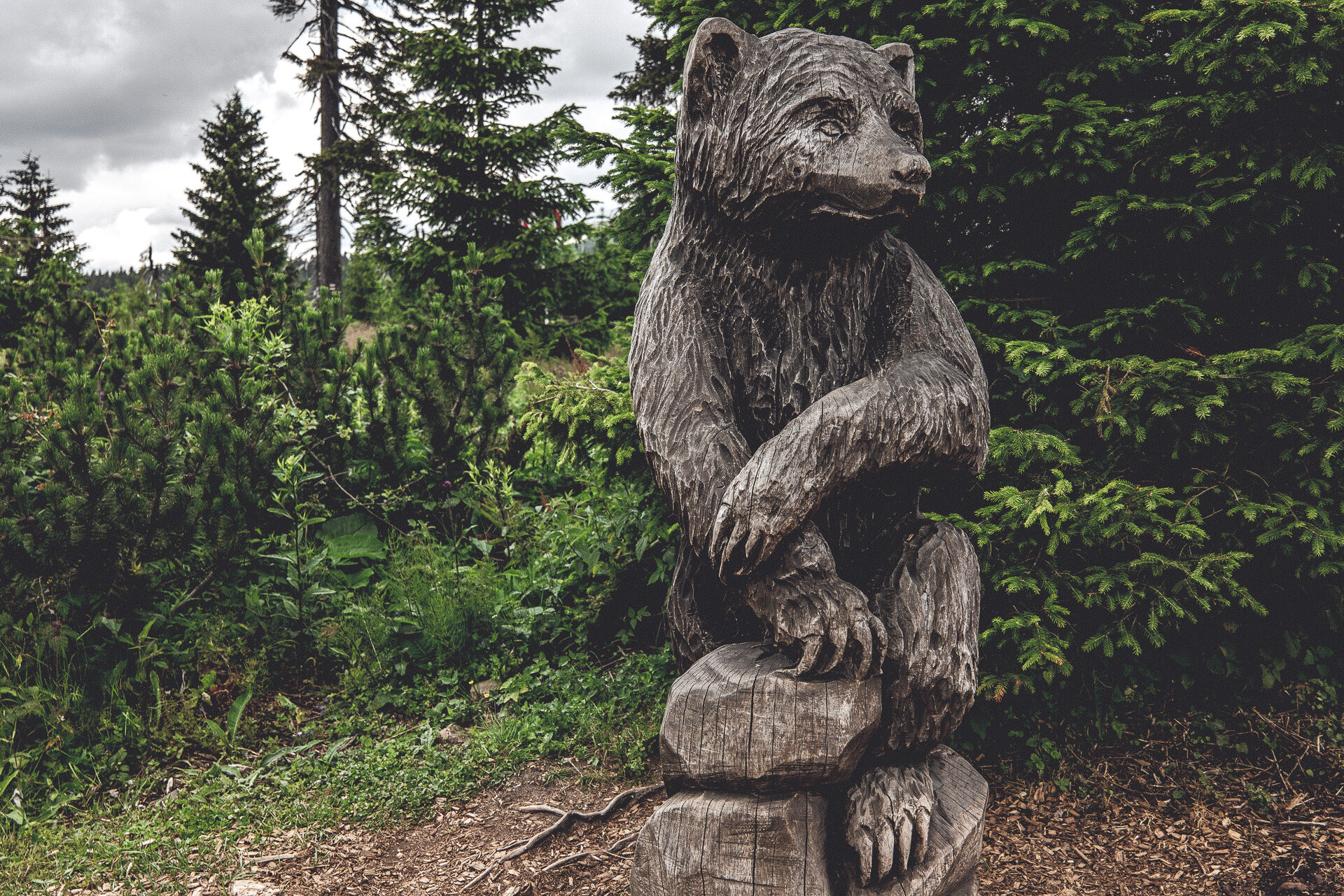 Es gibt also doch Bären auf dem Medvedin …