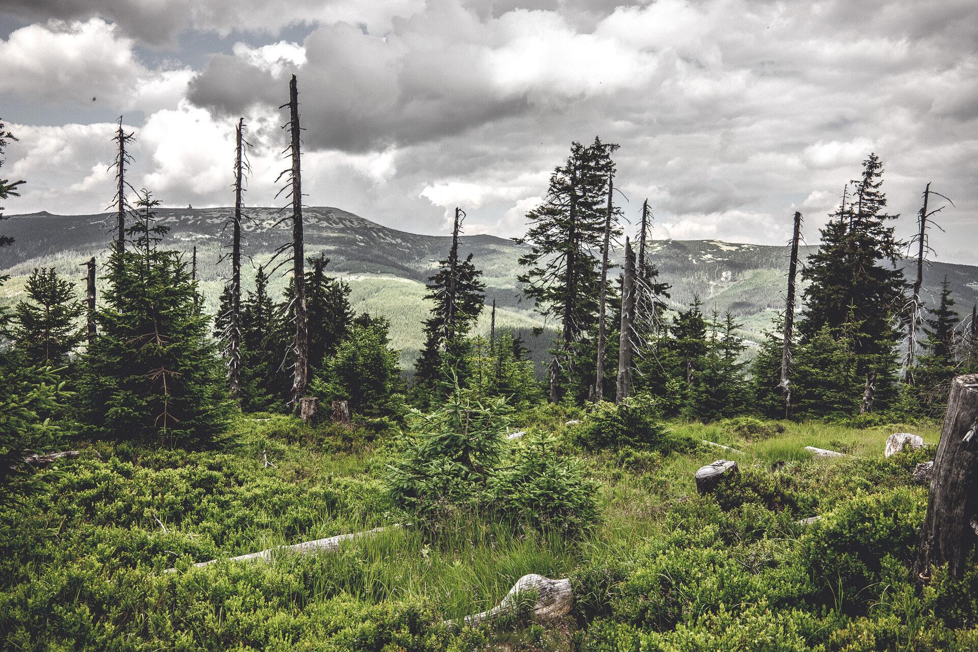Der Bärenwald vom Medvedin