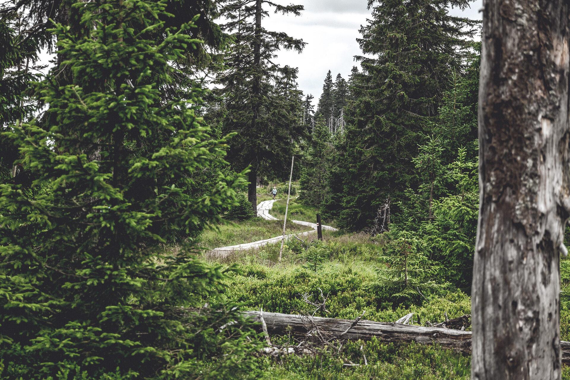 Endlich – der gesuchte Wanderweg