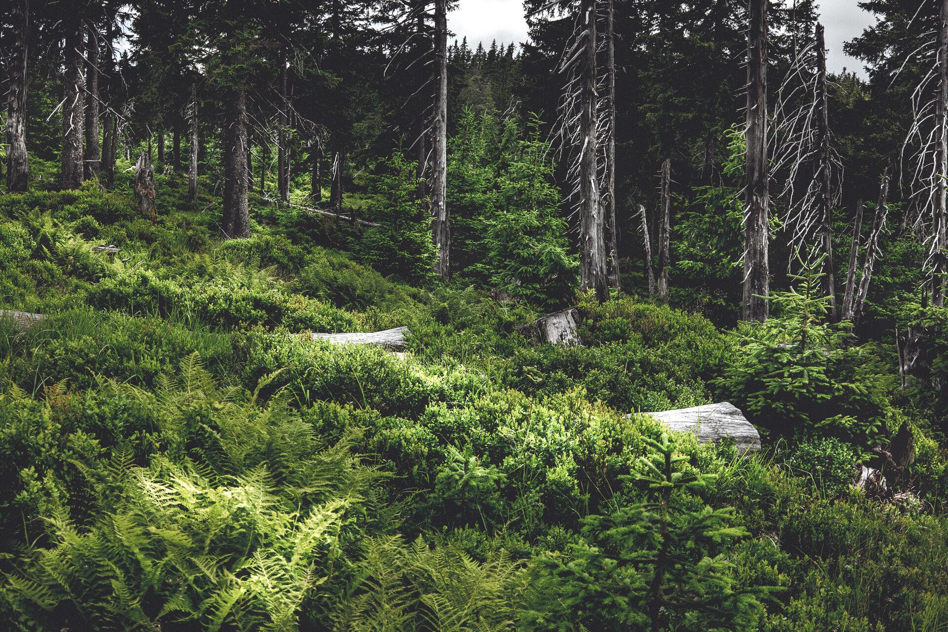 … im Märchenwald