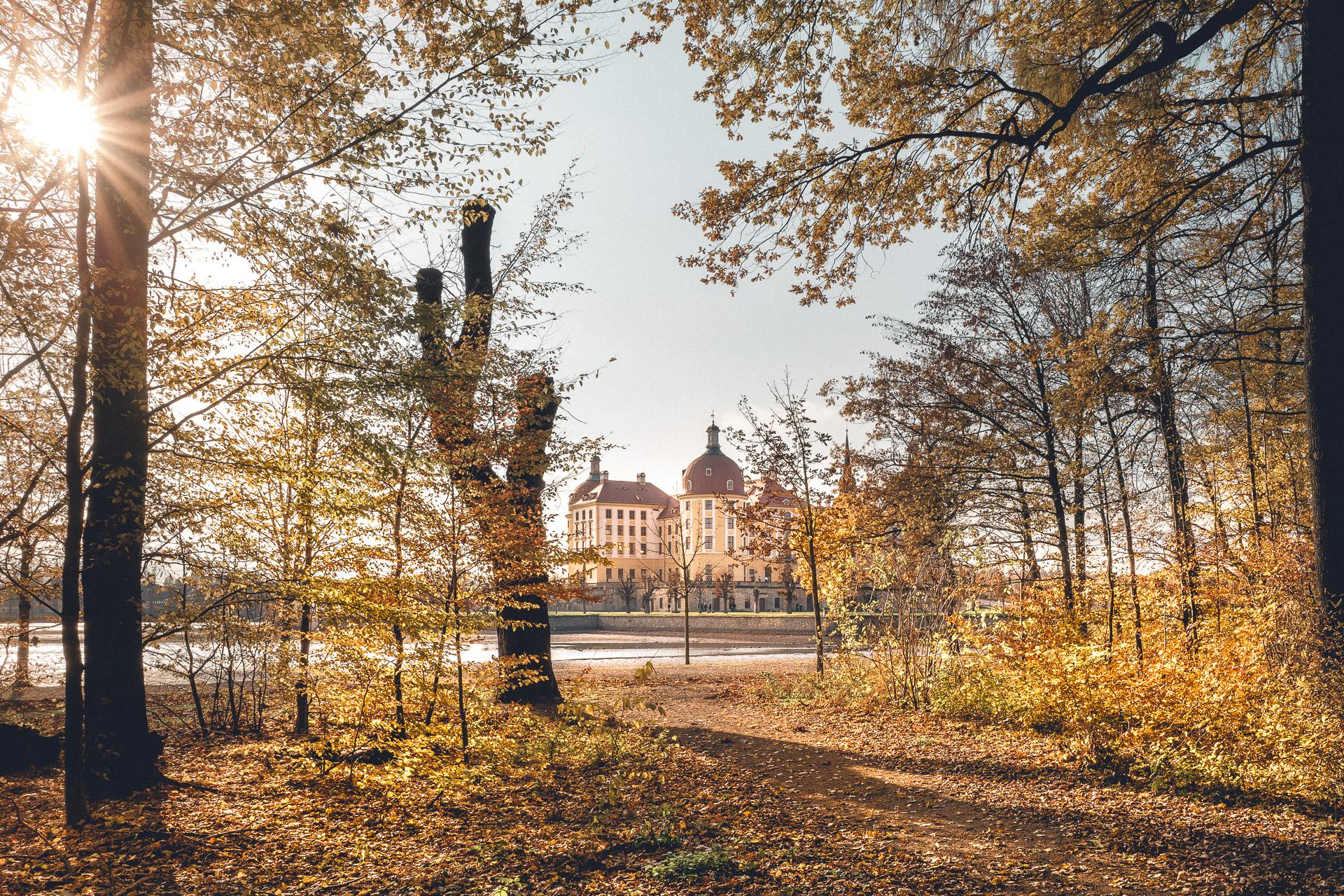 Schloss Moritzburg aus dem Wald