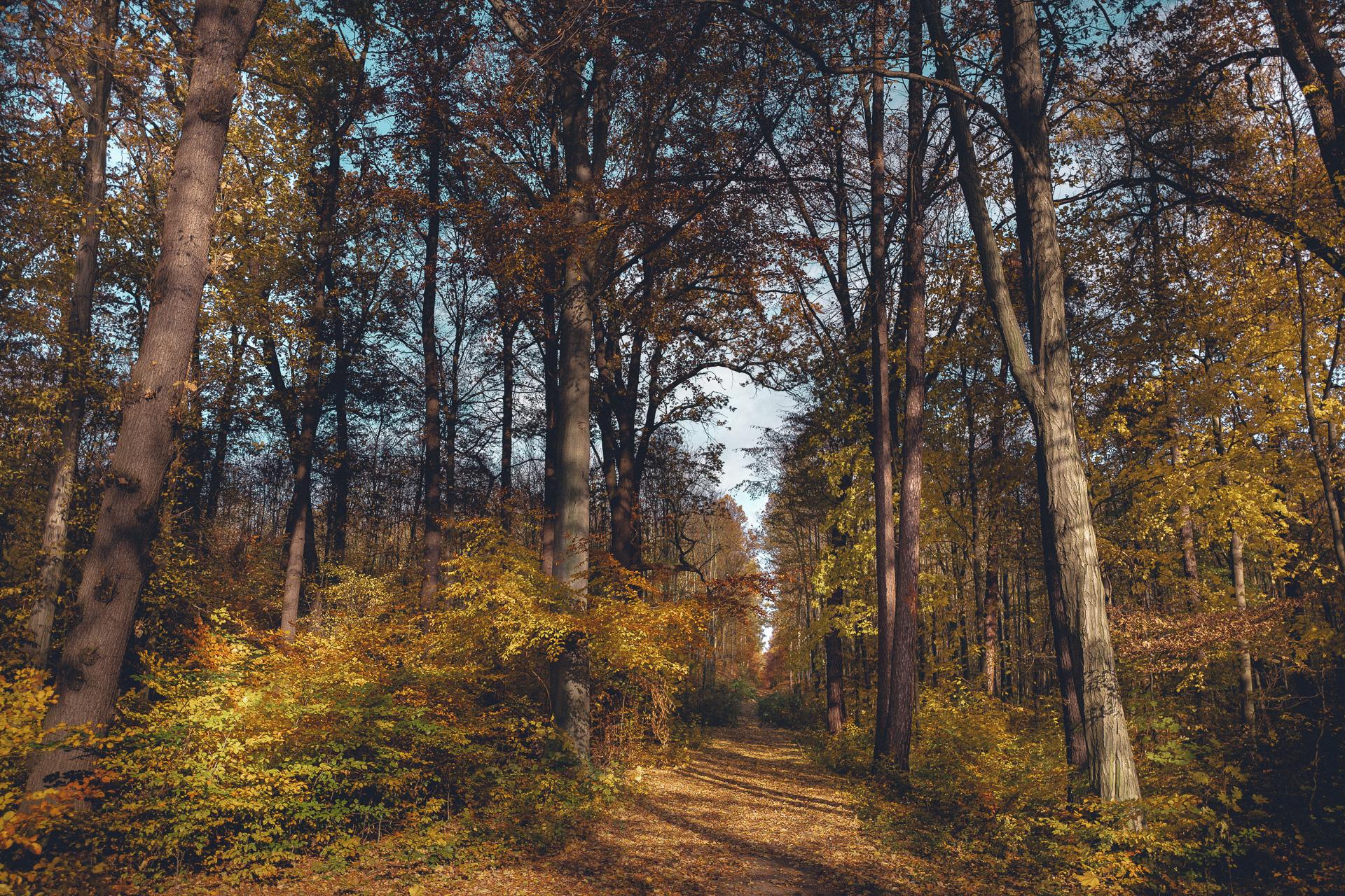 Wald in Moritzburg